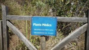 pianta medica